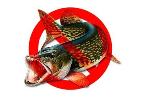 запрет на ловлю щуки